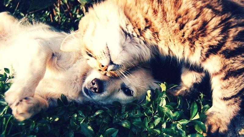 dünya-kedi-köpek-ekipbizz-blog